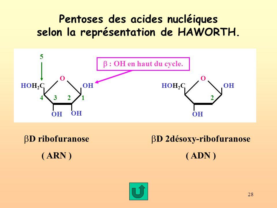 28 Pentoses des acides nucléiques selon la représentation de HAWORTH. D ribofuranose ( ARN ) HOH 2 C O OH 234 5 12 : OH en haut du cycle. OH HOH 2 C O