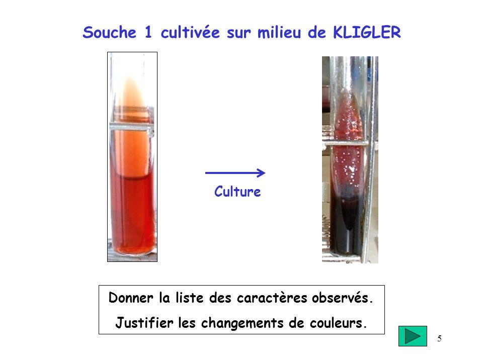 5 Souche 1 cultivée sur milieu de KLIGLER Donner la liste des caractères observés. Justifier les changements de couleurs. Culture