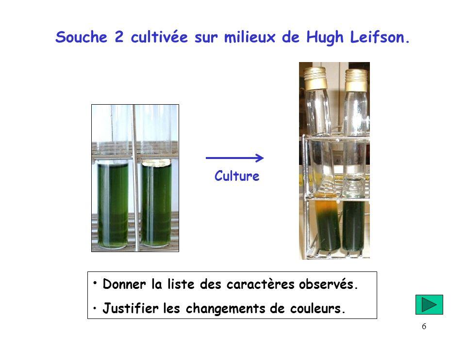 6 Souche 2 cultivée sur milieux de Hugh Leifson. Donner la liste des caractères observés. Justifier les changements de couleurs. Culture