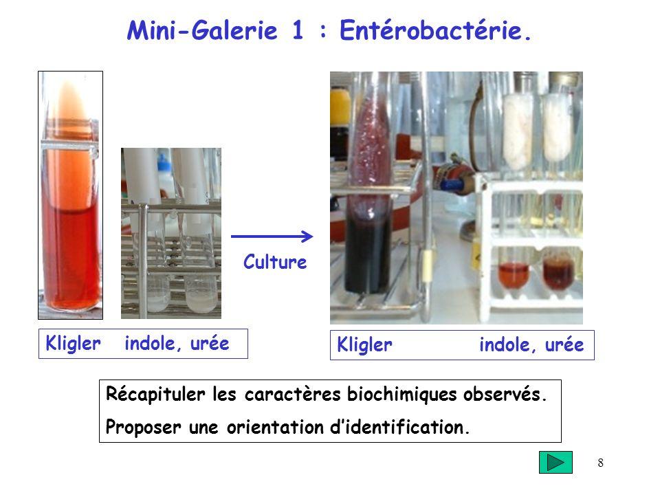 8 Mini-Galerie 1 : Entérobactérie. Kligler indole, urée Récapituler les caractères biochimiques observés. Proposer une orientation didentification. Kl