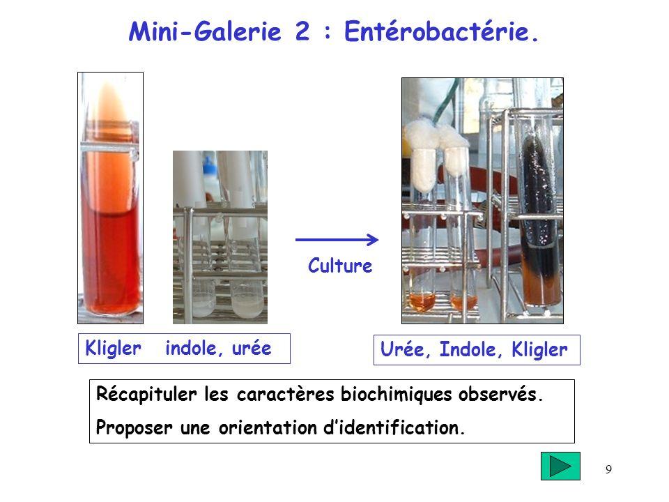9 Mini-Galerie 2 : Entérobactérie. Récapituler les caractères biochimiques observés. Proposer une orientation didentification. Urée, Indole, Kligler i