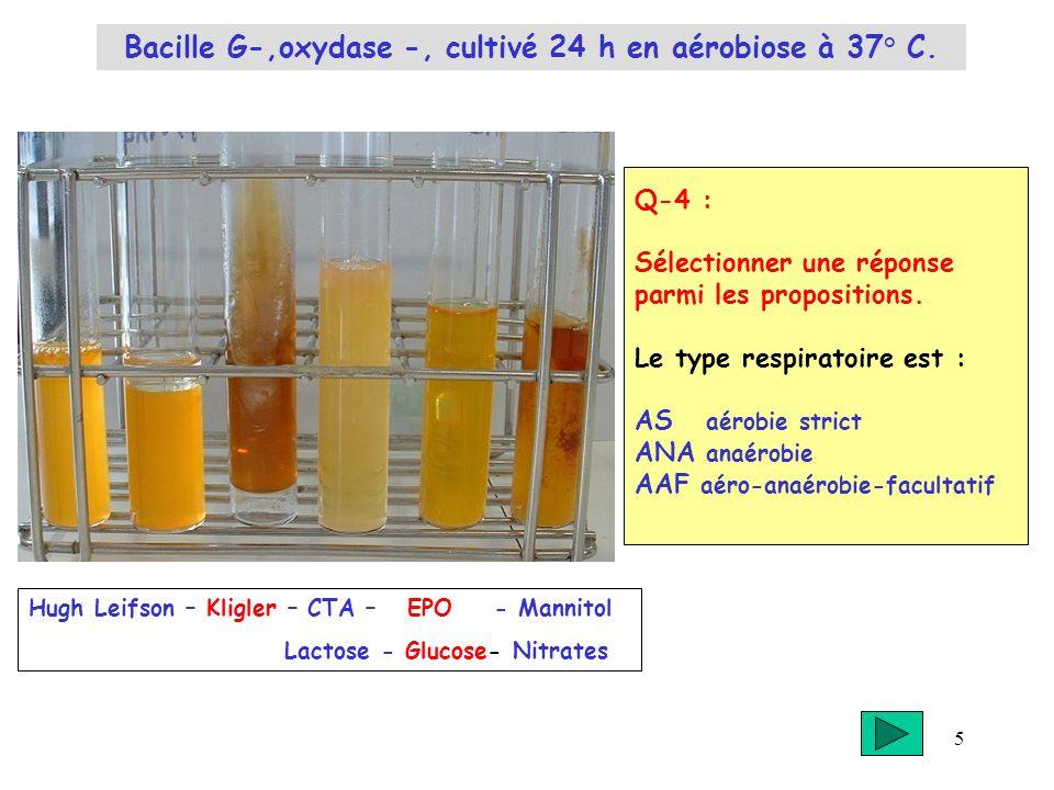 5 Q-4 : Sélectionner une réponse parmi les propositions. Le type respiratoire est : AS aérobie strict ANA anaérobie AAF aéro-anaérobie-facultatif Hugh