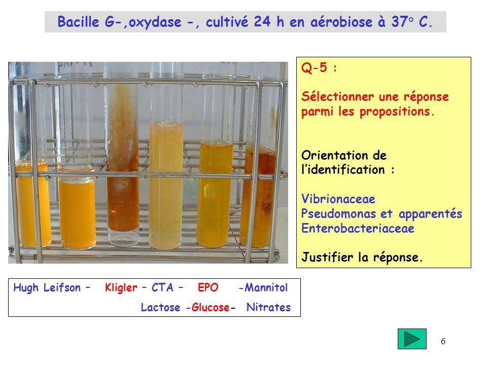 6 Q-5 : Sélectionner une réponse parmi les propositions. Orientation de lidentification : Vibrionaceae Pseudomonas et apparentés Enterobacteriaceae Ju