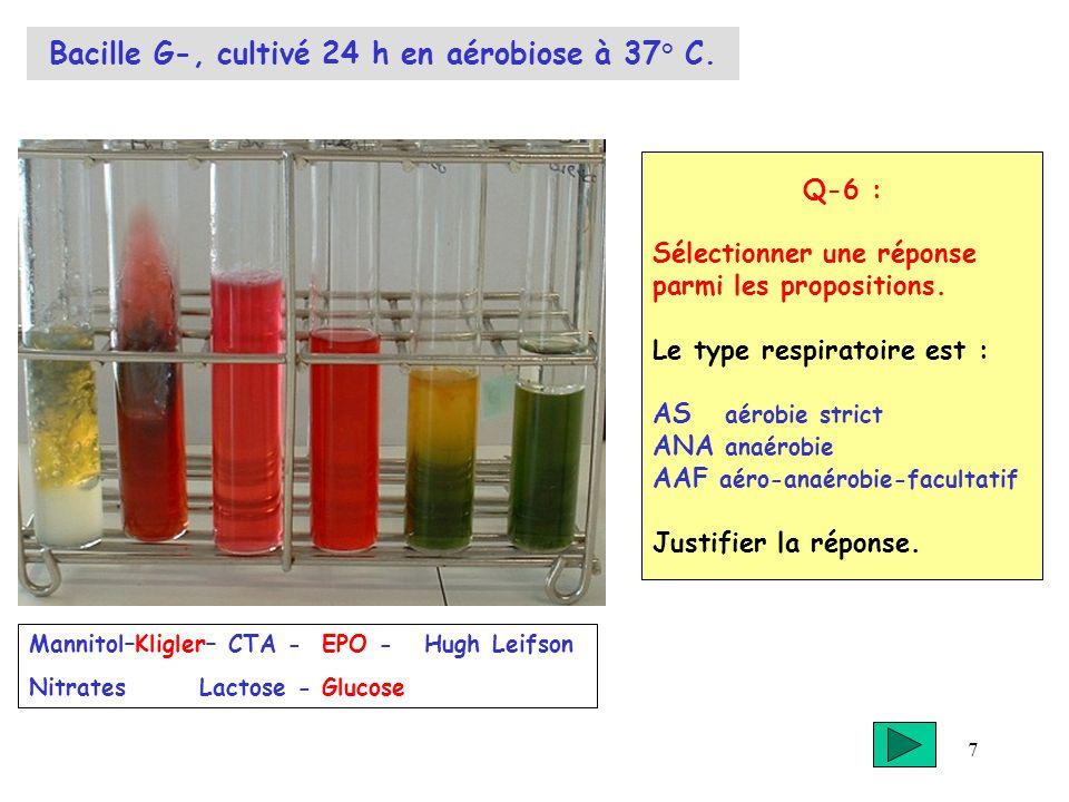 7 Bacille G-, cultivé 24 h en aérobiose à 37° C. Q-6 : Sélectionner une réponse parmi les propositions. Le type respiratoire est : AS aérobie strict A