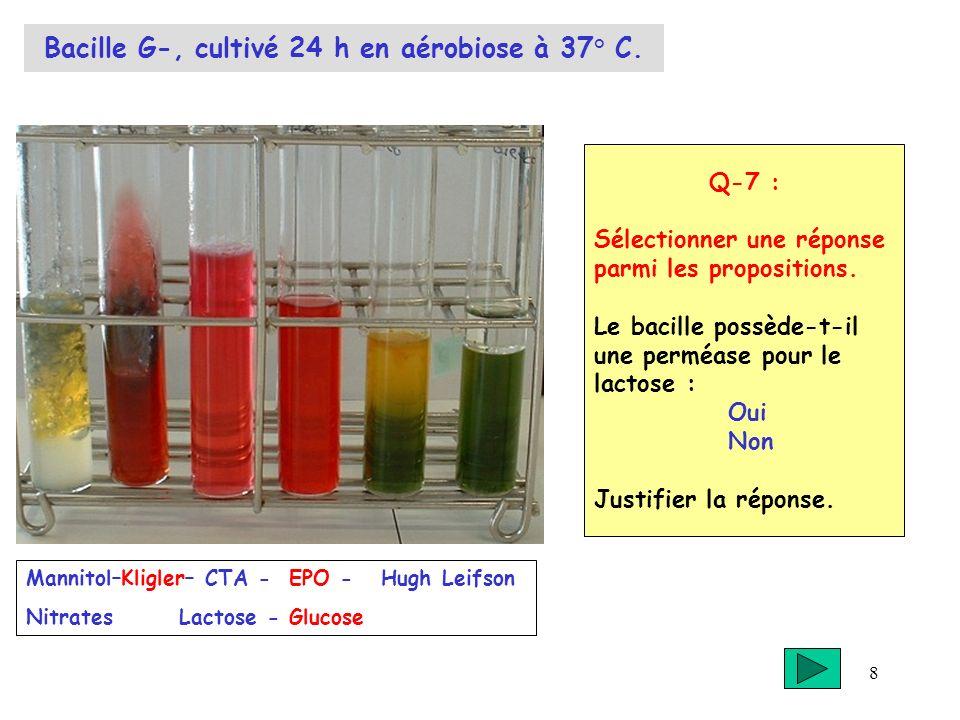 8 Bacille G-, cultivé 24 h en aérobiose à 37° C. Q-7 : Sélectionner une réponse parmi les propositions. Le bacille possède-t-il une perméase pour le l
