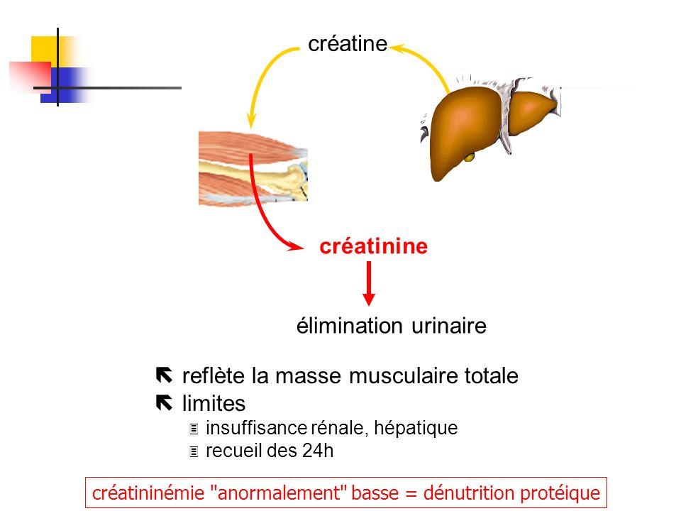 ë reflète la masse musculaire totale ë limites 3 insuffisance rénale, hépatique 3 recueil des 24h créatine créatinine élimination urinaire créatininém