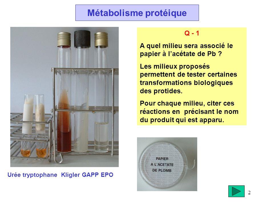 2 Métabolisme protéique Urée tryptophane Kligler GAPP EPO Q - 1 A quel milieu sera associé le papier à lacétate de Pb ? Les milieux proposés permetten