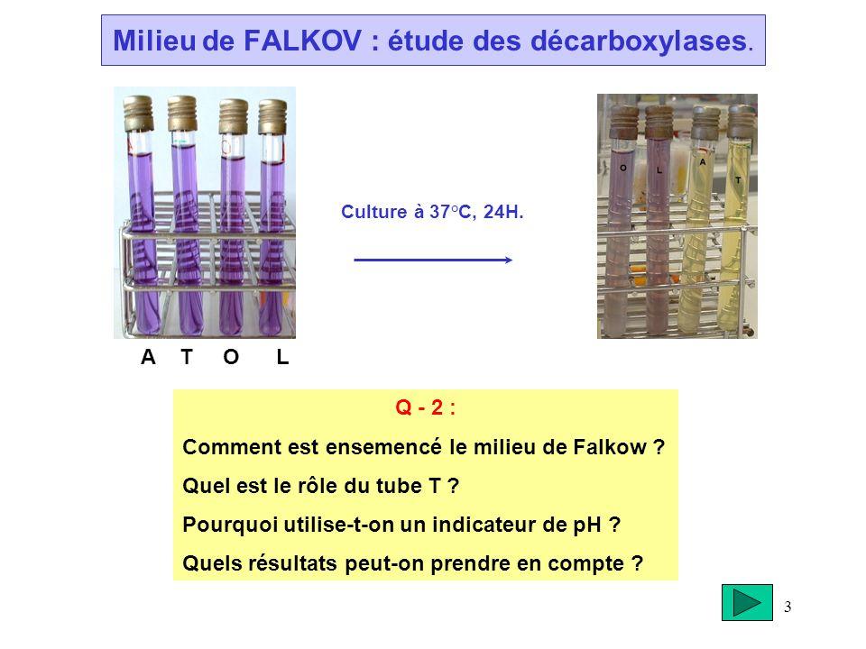 3 Milieu de FALKOV : étude des décarboxylases. Culture à 37°C, 24H. A T O L Q - 2 : Comment est ensemencé le milieu de Falkow ? Quel est le rôle du tu