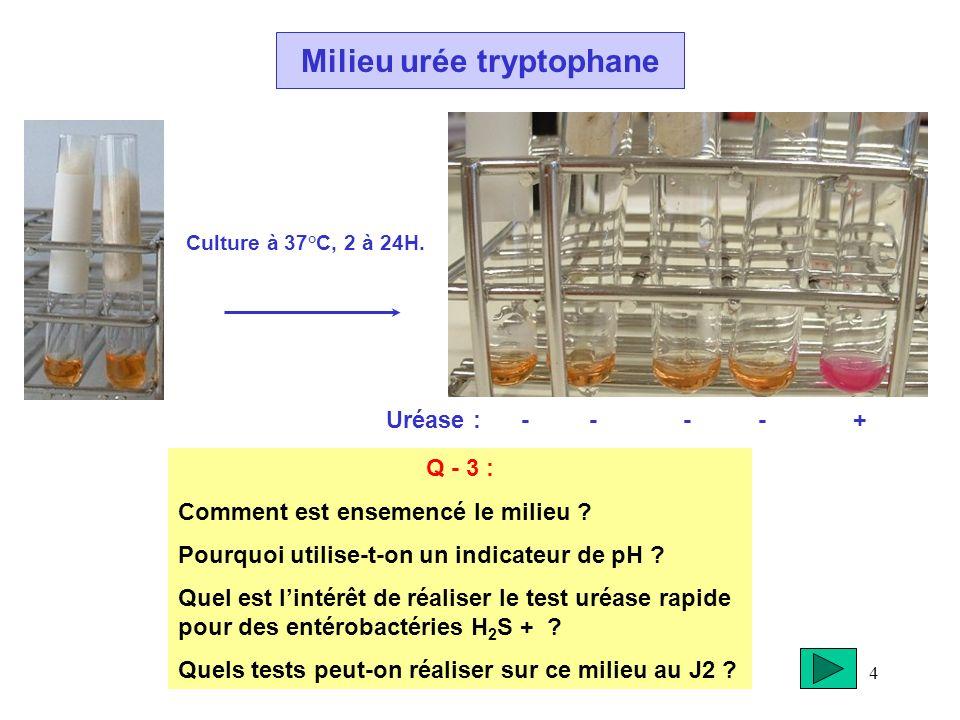 4 Milieu urée tryptophane Culture à 37°C, 2 à 24H. Q - 3 : Comment est ensemencé le milieu ? Pourquoi utilise-t-on un indicateur de pH ? Quel est lint