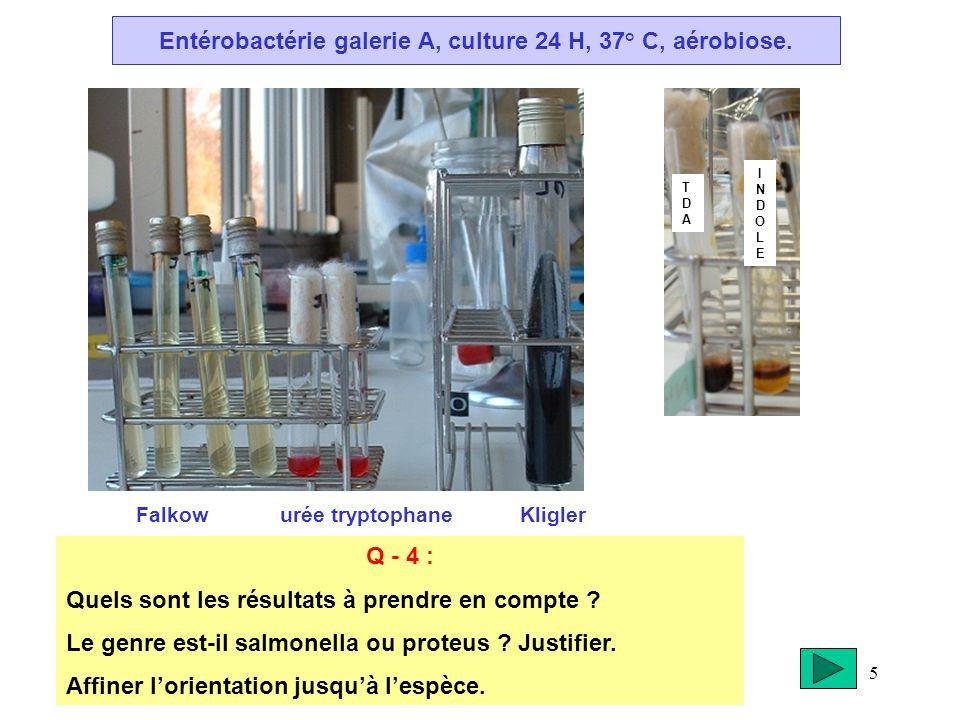 5 Entérobactérie galerie A, culture 24 H, 37° C, aérobiose. Falkow urée tryptophane Kligler Q - 4 : Quels sont les résultats à prendre en compte ? Le