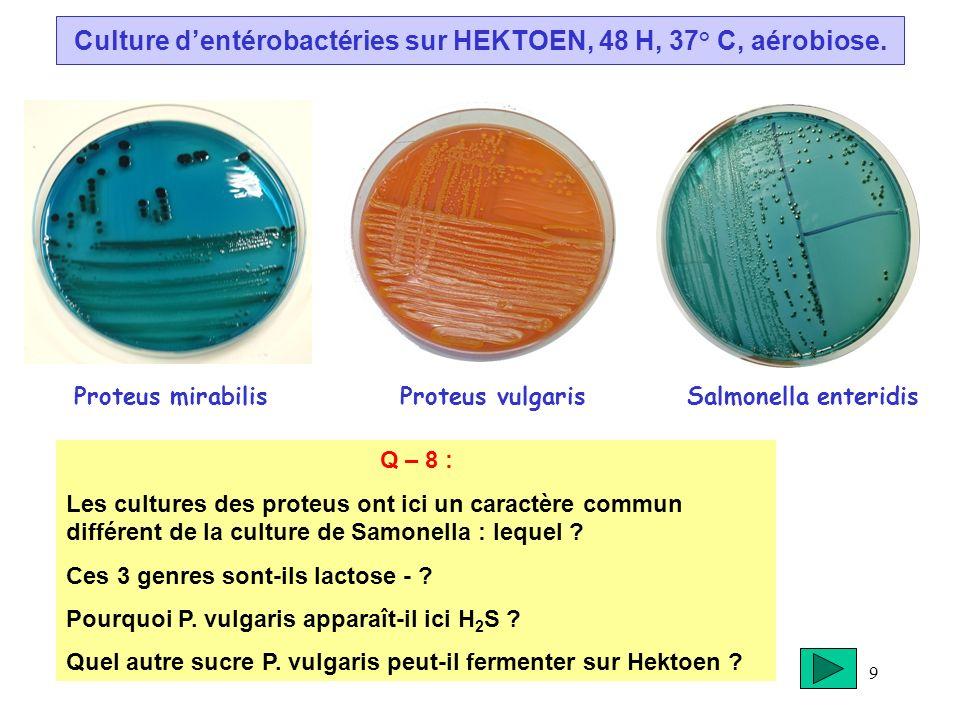 9 Culture dentérobactéries sur HEKTOEN, 48 H, 37° C, aérobiose. Proteus mirabilis Proteus vulgaris Salmonella enteridis Q – 8 : Les cultures des prote