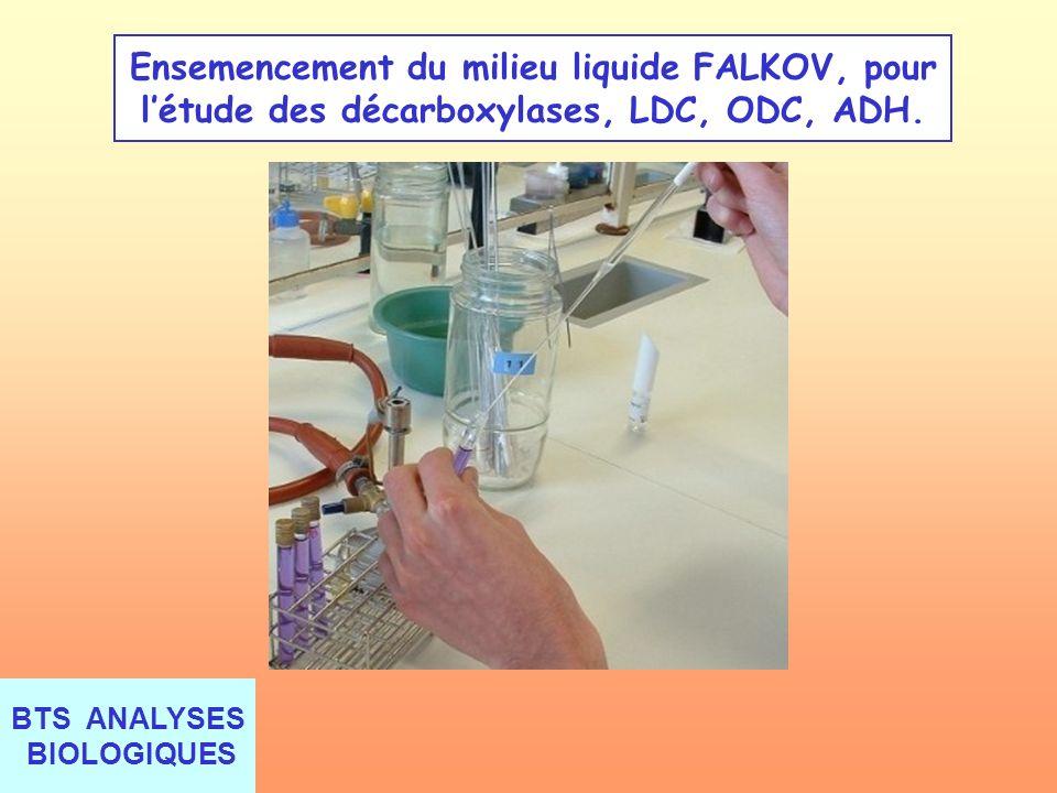 BTS ANALYSES BIOLOGIQUES Ensemencement du milieu liquide FALKOV, pour létude des décarboxylases, LDC, ODC, ADH.