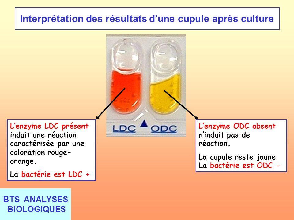 BTS ANALYSES BIOLOGIQUES Interprétation des résultats dune cupule après culture Lenzyme LDC présent induit une réaction caractérisée par une coloratio