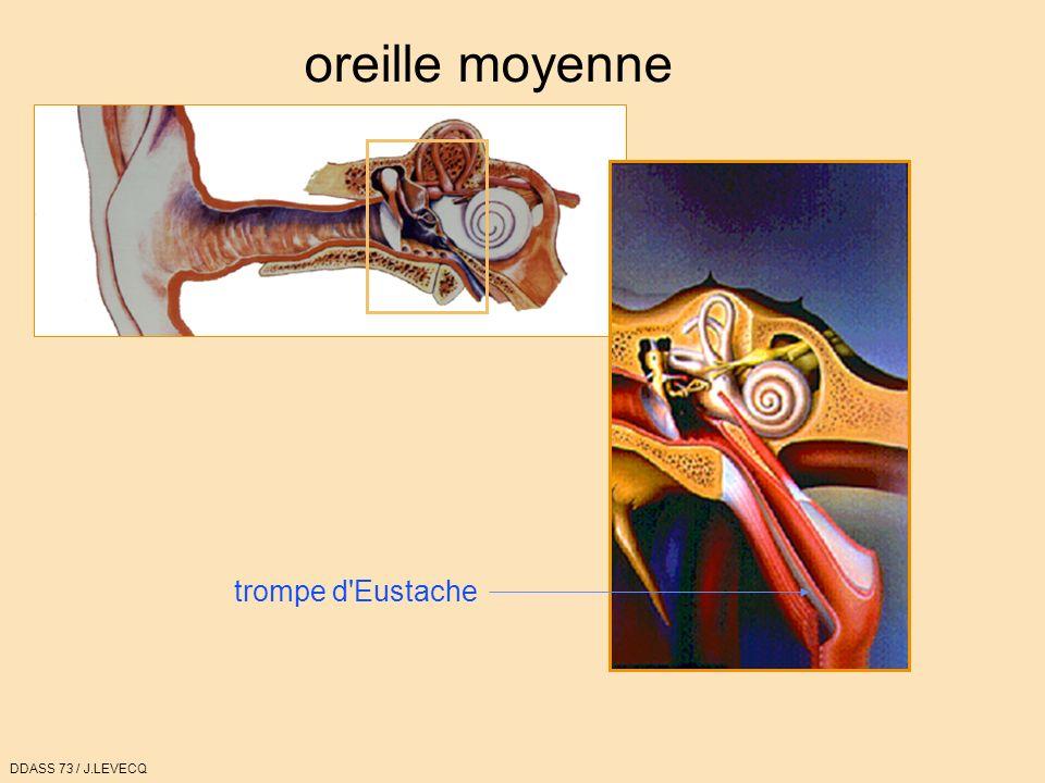 oreille moyenne trompe d'Eustache DDASS 73 / J.LEVECQ