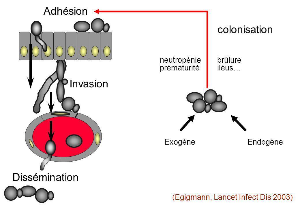 Invasion ExogèneEndogène Dissémination Adhésion (Egigmann, Lancet Infect Dis 2003) colonisation neutropénie brûlure prématurité iléus…