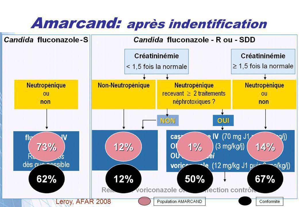 Amarcand: après indentification Leroy, AFAR 2008