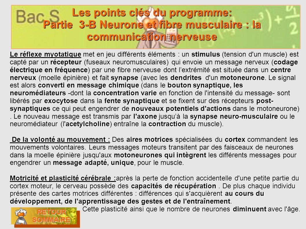 Les points clés du programme: Partie 3-B Neurone et fibre musculaire : la communication nerveuse RETOUR SOMMAIRE RETOUR SOMMAIRE RETOUR SOMMAIRE RETOU