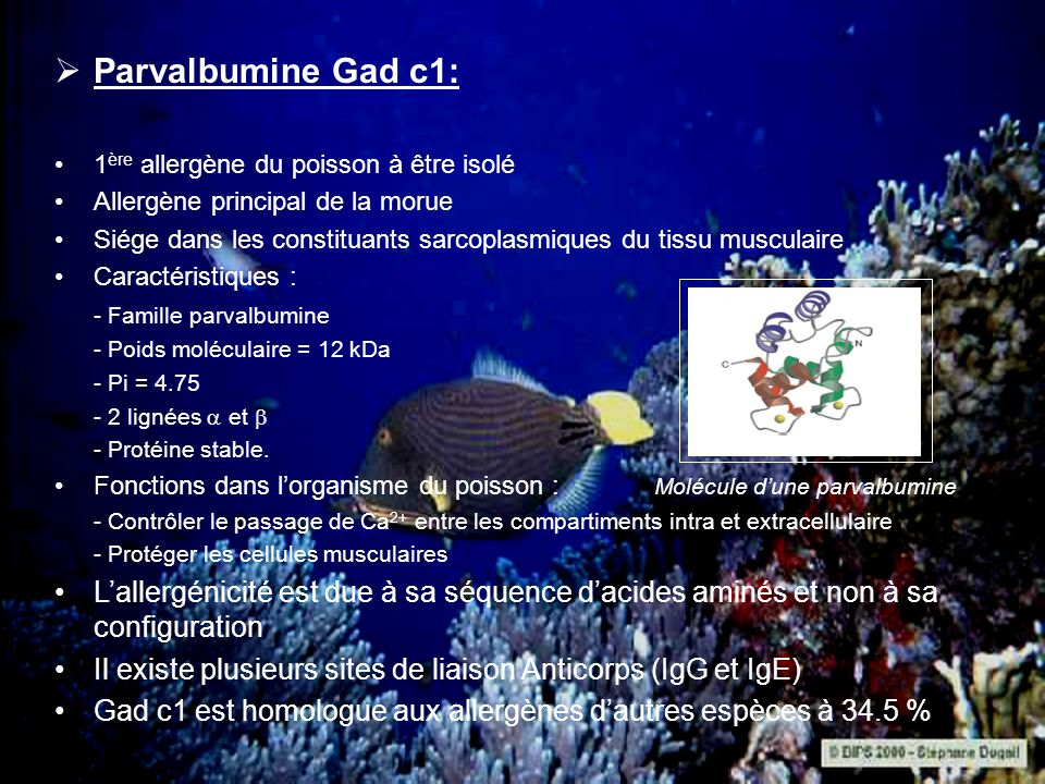 Parvalbumine Gad c1: 1 ère allergène du poisson à être isolé Allergène principal de la morue Siége dans les constituants sarcoplasmiques du tissu musc