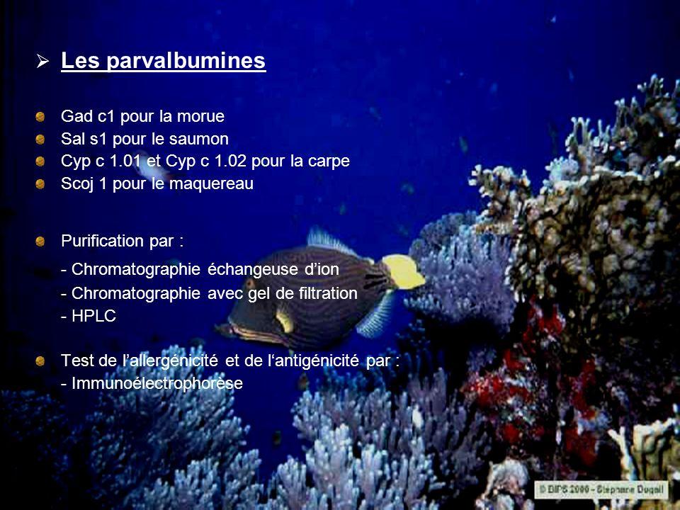 Les parvalbumines Gad c1 pour la morue Sal s1 pour le saumon Cyp c 1.01 et Cyp c 1.02 pour la carpe Scoj 1 pour le maquereau Purification par : - Chro