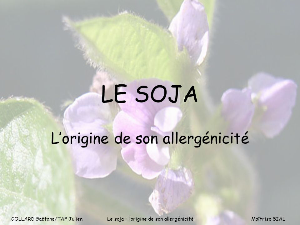 COLLARD Gaëtane/TAP Julien1 LE SOJA Lorigine de son allergénicité COLLARD Gaëtane/TAP Julien Le soja : lorigine de son allergénicitéMaîtrise SIAL