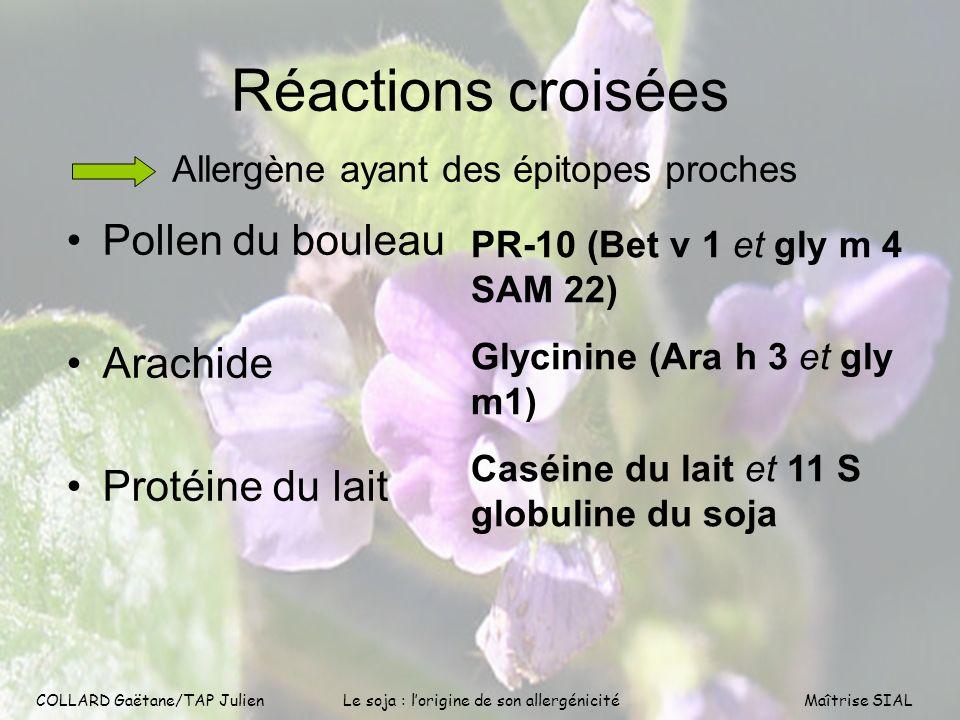 COLLARD Gaëtane/TAP Julien13 COLLARD Gaëtane/TAP Julien Le soja : lorigine de son allergénicitéMaîtrise SIAL Réactions croisées Allergène ayant des ép