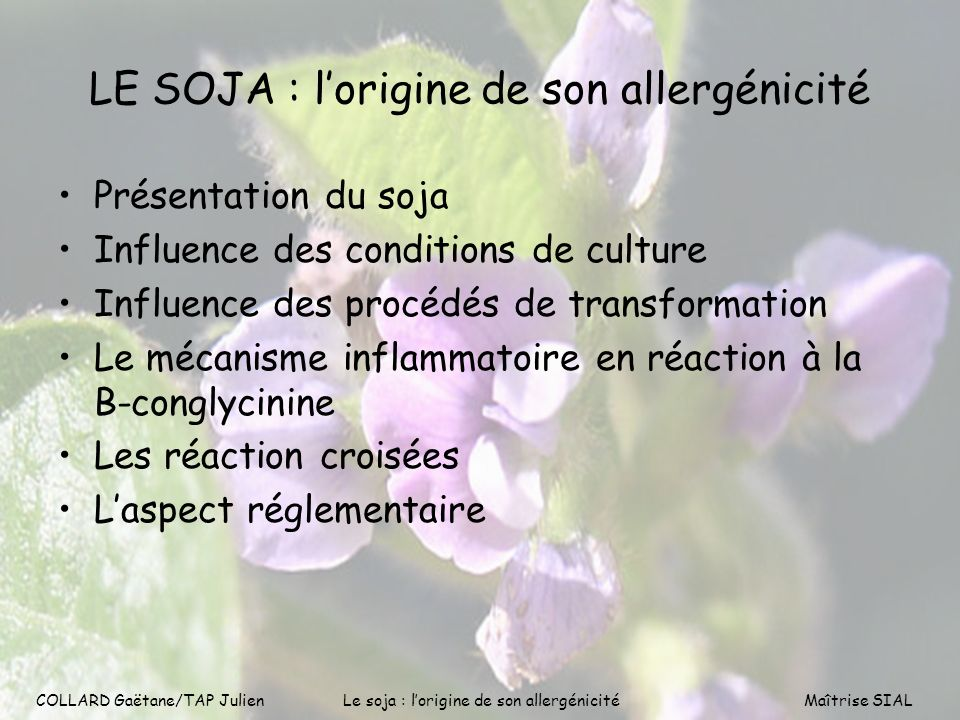 COLLARD Gaëtane/TAP Julien2 LE SOJA : lorigine de son allergénicité Présentation du soja Influence des conditions de culture Influence des procédés de