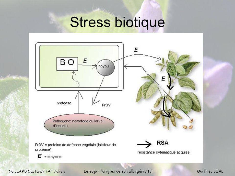 COLLARD Gaëtane/TAP Julien6 COLLARD Gaëtane/TAP Julien Le soja : lorigine de son allergénicitéMaîtrise SIAL Stress biotique