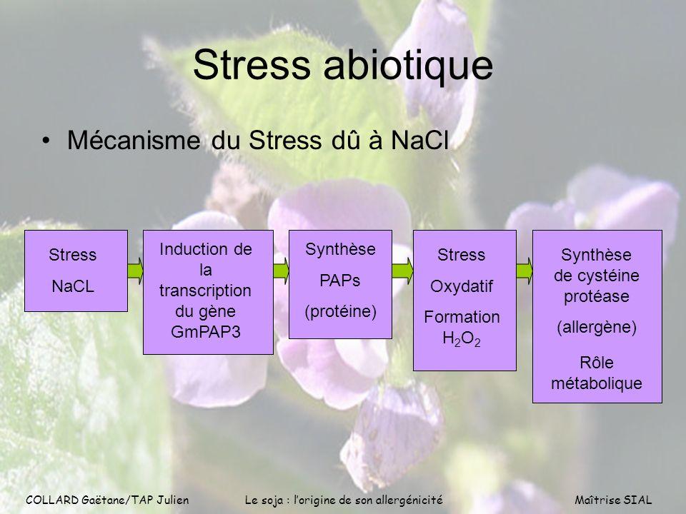 COLLARD Gaëtane/TAP Julien8 COLLARD Gaëtane/TAP Julien Le soja : lorigine de son allergénicitéMaîtrise SIAL Stress abiotique Mécanisme du Stress dû à