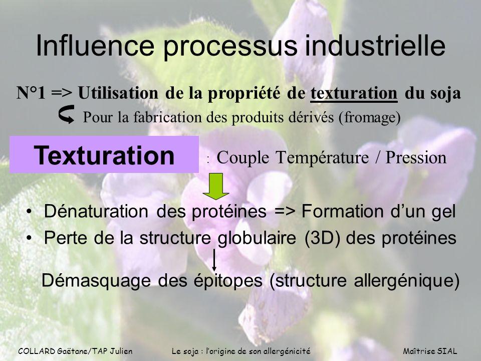 COLLARD Gaëtane/TAP Julien9 COLLARD Gaëtane/TAP Julien Le soja : lorigine de son allergénicitéMaîtrise SIAL Influence processus industrielle : Couple
