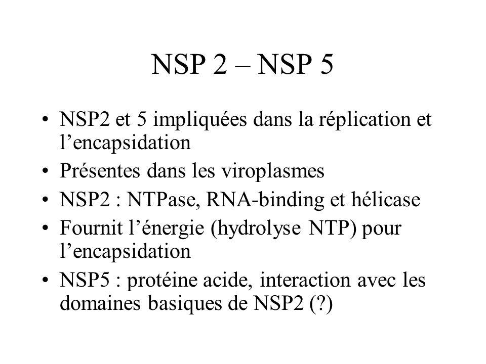 NSP 2 – NSP 5 NSP2 et 5 impliquées dans la réplication et lencapsidation Présentes dans les viroplasmes NSP2 : NTPase, RNA-binding et hélicase Fournit
