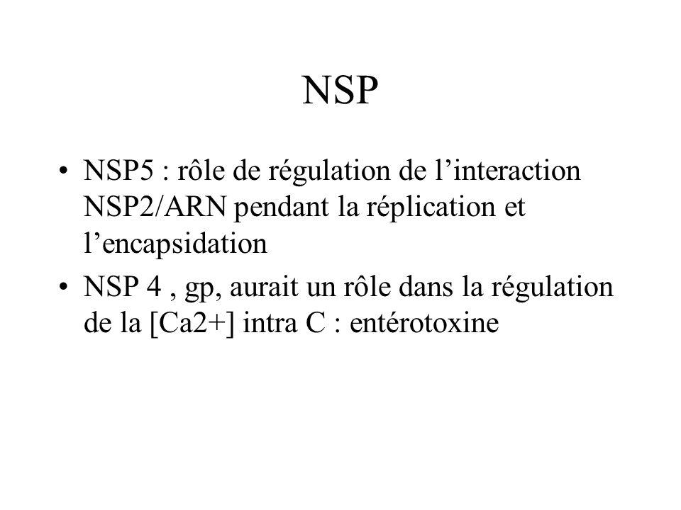 NSP NSP5 : rôle de régulation de linteraction NSP2/ARN pendant la réplication et lencapsidation NSP 4, gp, aurait un rôle dans la régulation de la [Ca