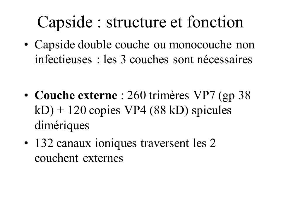 Capside : structure et fonction Capside double couche ou monocouche non infectieuses : les 3 couches sont nécessaires Couche externe : 260 trimères VP