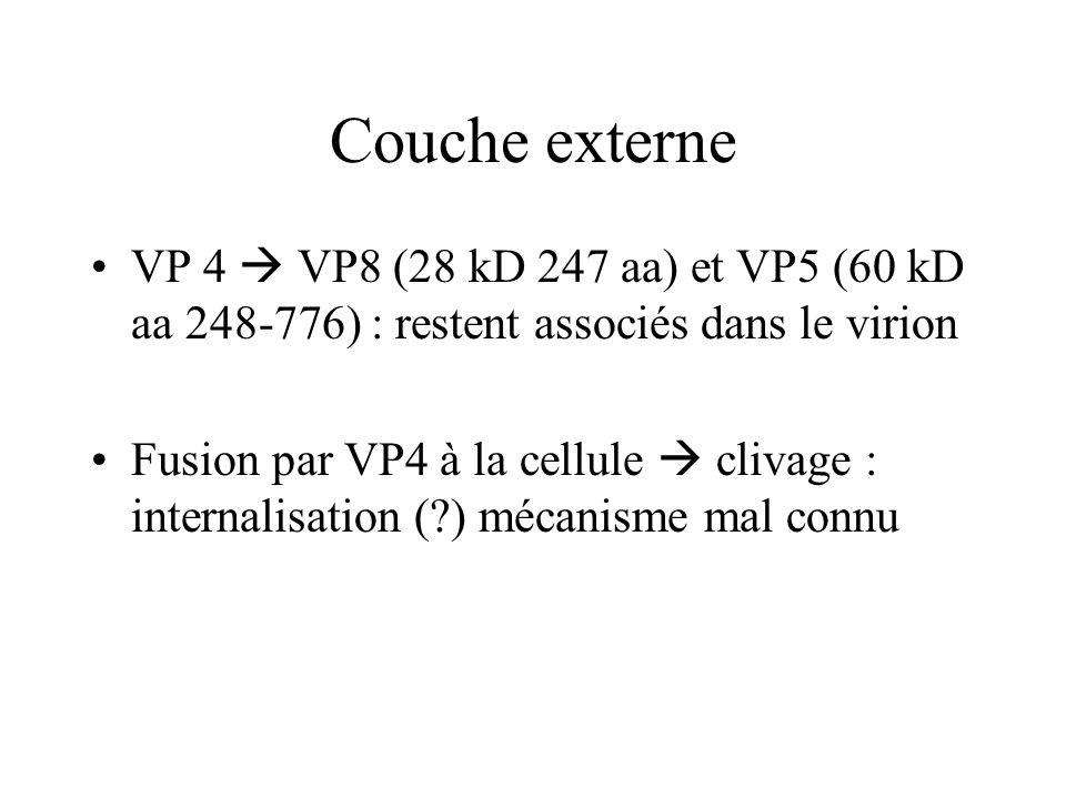 Couche externe VP 4 VP8 (28 kD 247 aa) et VP5 (60 kD aa 248-776) : restent associés dans le virion Fusion par VP4 à la cellule clivage : internalisati