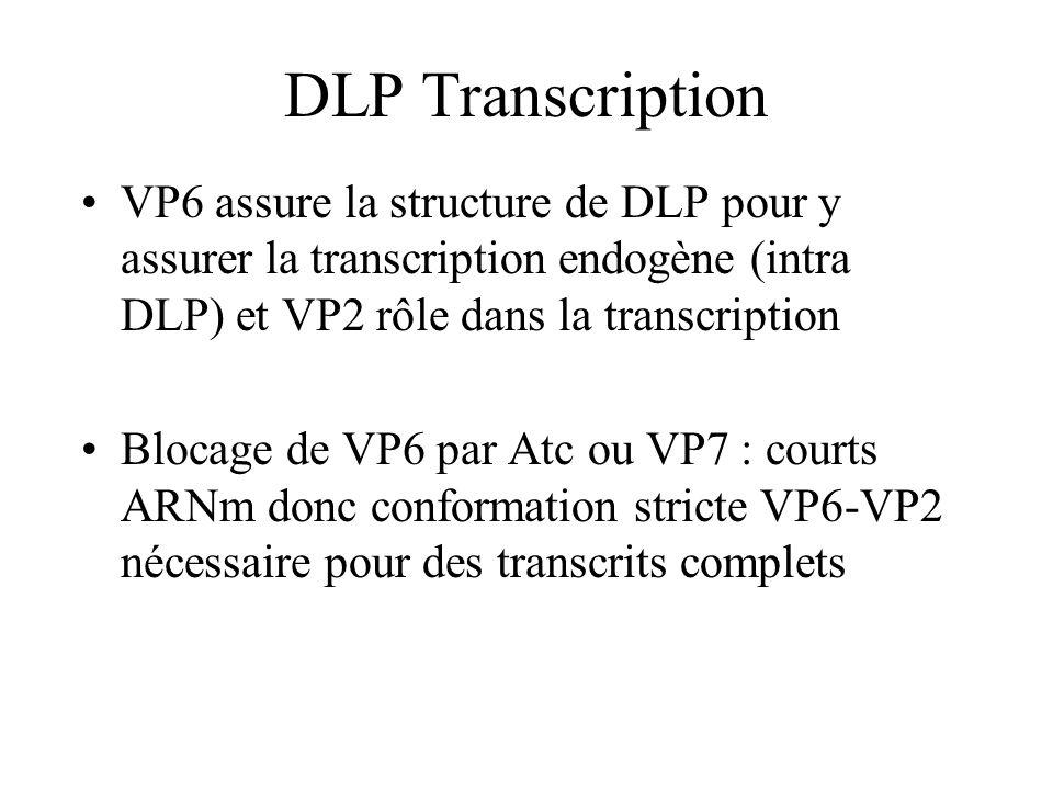 DLP Transcription VP6 assure la structure de DLP pour y assurer la transcription endogène (intra DLP) et VP2 rôle dans la transcription Blocage de VP6