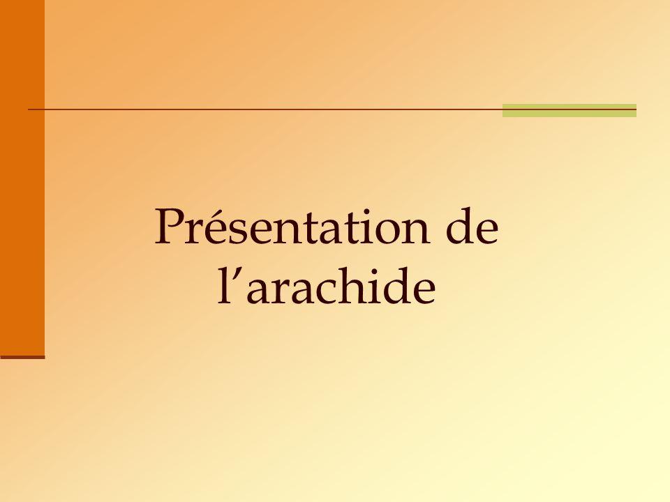 Présentation de larachide