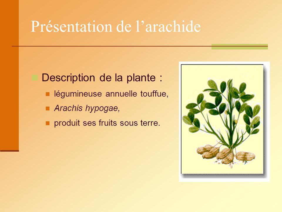 Description de la plante : légumineuse annuelle touffue, Arachis hypogae, produit ses fruits sous terre.