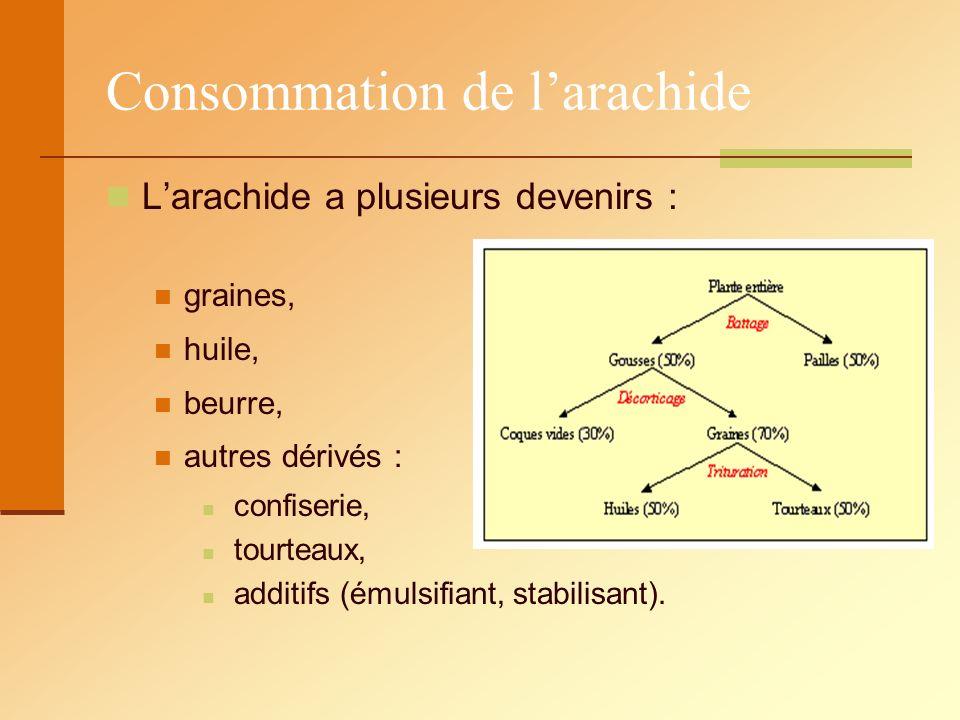 Consommation de larachide Larachide a plusieurs devenirs : graines, huile, beurre, autres dérivés : confiserie, tourteaux, additifs (émulsifiant, stab