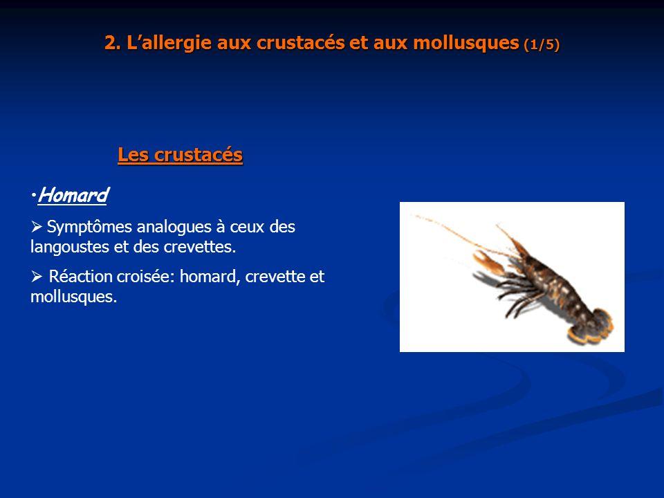 2. Lallergie aux crustacés et aux mollusques (1/5) Les crustacés Homard Symptômes analogues à ceux des langoustes et des crevettes. Réaction croisée: