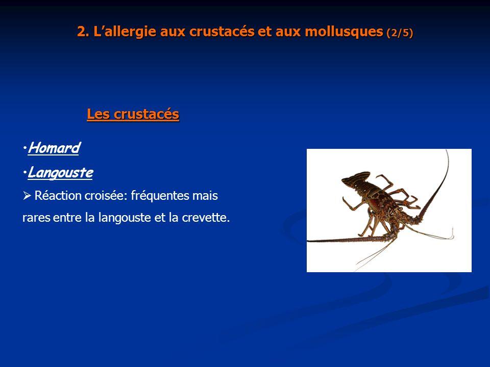Homard Langouste Réaction croisée: fréquentes mais rares entre la langouste et la crevette. Les crustacés 2. Lallergie aux crustacés et aux mollusques