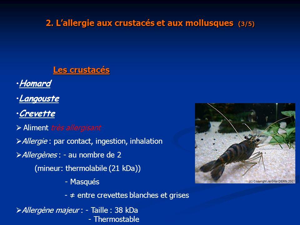 Homard Langouste Crevette Aliment très allergisant Allergie : par contact, ingestion, inhalation Allergènes : - au nombre de 2 (mineur: thermolabile (