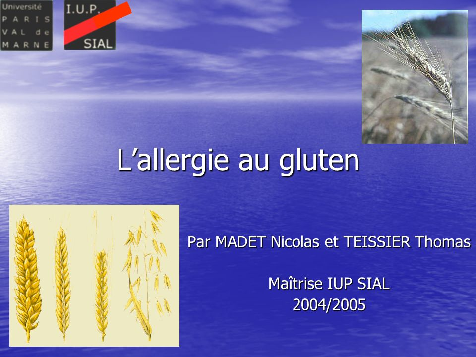 Lallergie au gluten Par MADET Nicolas et TEISSIER Thomas Maîtrise IUP SIAL 2004/2005