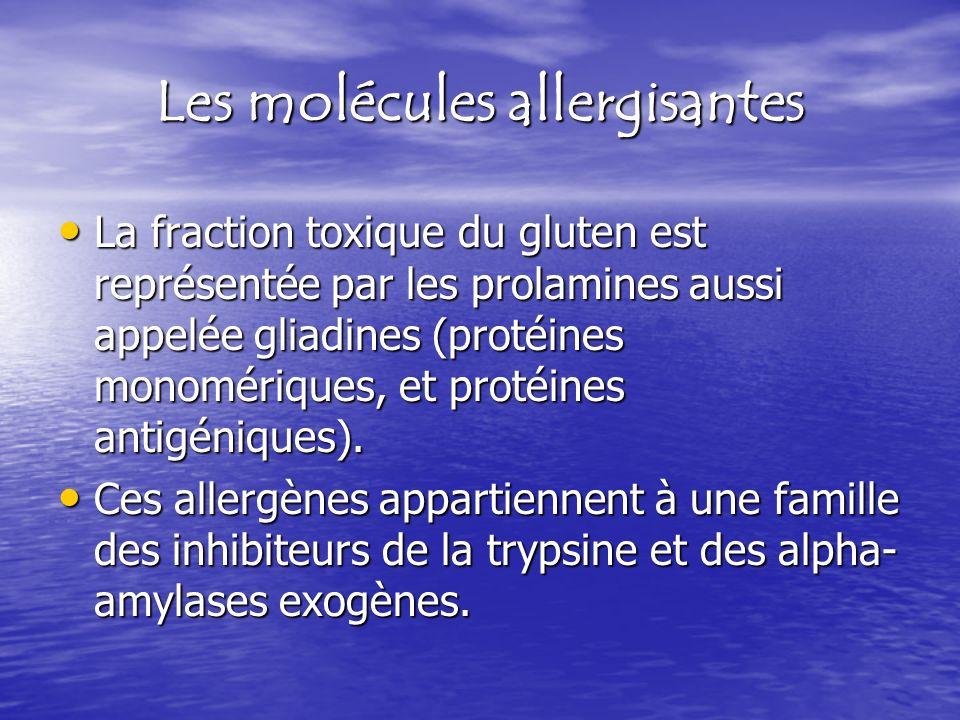 Les molécules allergisantes La fraction toxique du gluten est représentée par les prolamines aussi appelée gliadines (protéines monomériques, et proté