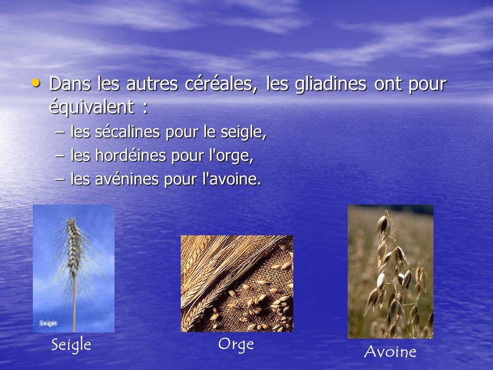 Dans les autres céréales, les gliadines ont pour équivalent : Dans les autres céréales, les gliadines ont pour équivalent : –les sécalines pour le sei