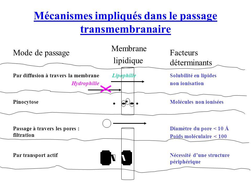 Mécanismes impliqués dans le passage transmembranaire Nécessité dune structure périphérique Par transport actif Diamètre du pore < 10 Å Poids moléculaire < 100 Passage à travers les pores : filtration Molécules non ioniséesPinocytose Solubilité en lipides non ionisation LipophiliePar diffusion à travers la membrane Hydrophilie Facteurs déterminants Membrane lipidique Mode de passage