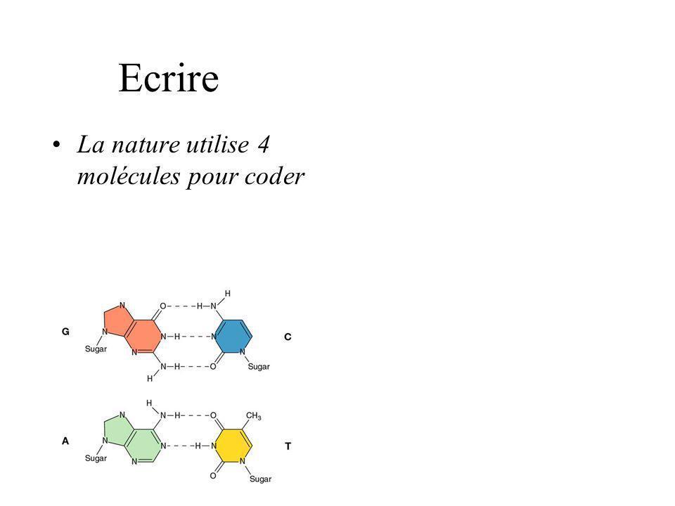 Ecrire La nature utilise 4 molécules