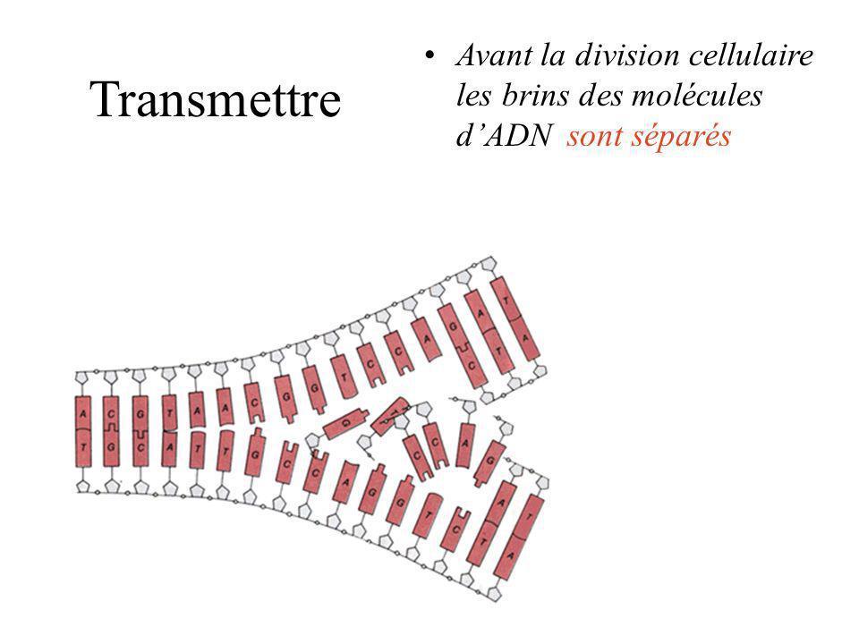 Transmettre une cellule est une usine à dupliquer linformation contenue dans lADN