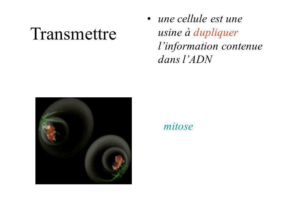mitose Transmettre une cellule est une usine à dupliquer linformation contenue dans lADN