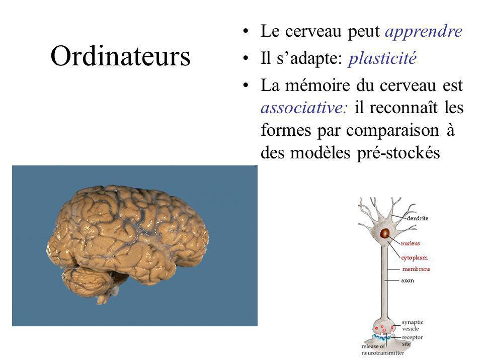 Ordinateurs Dans le cerveau les signaux ne sont pas binaires mais activés à partir de seuils Les opérations ne sont pas éxécutées séquentiellement