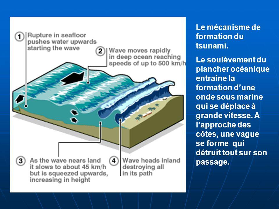 Le mécanisme de formation du tsunami. Le soulèvement du plancher océanique entraîne la formation dune onde sous marine qui se déplace à grande vitesse