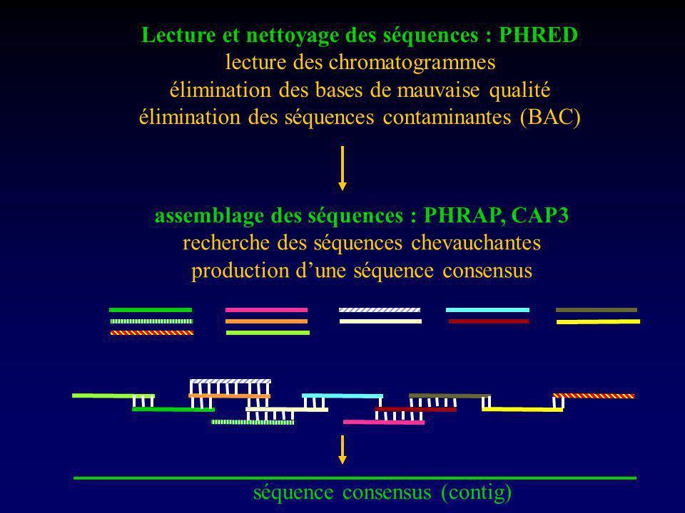 Lecture et nettoyage des séquences : PHRED lecture des chromatogrammes élimination des bases de mauvaise qualité élimination des séquences contaminantes (BAC) assemblage des séquences : PHRAP, CAP3 recherche des séquences chevauchantes production dune séquence consensus séquence consensus (contig)